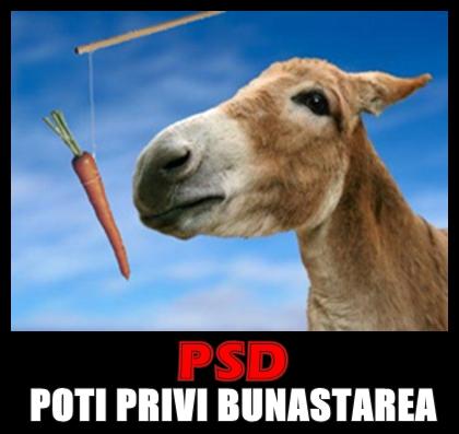 psd-morcov